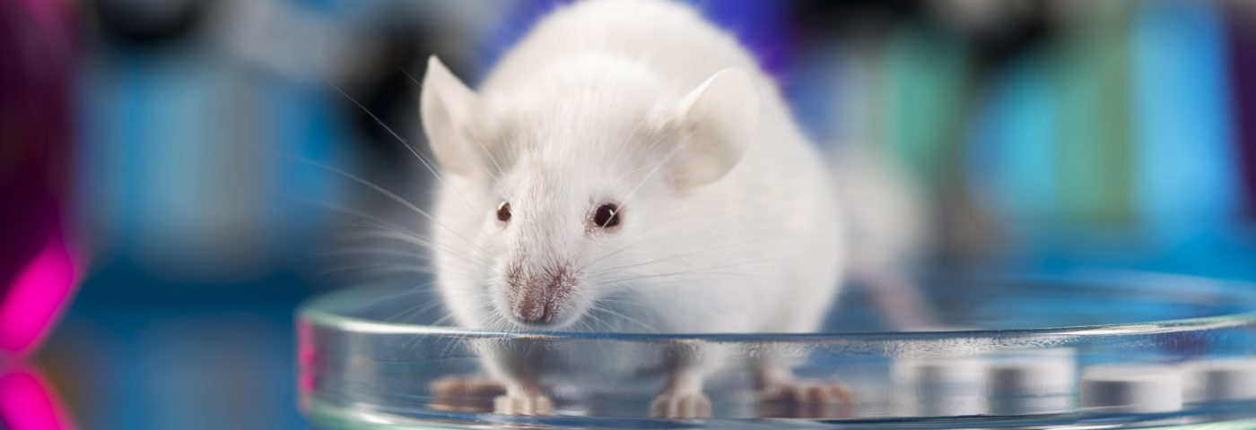 Adoptive Cell Therapy Can Slow Prostate Cancer Growth, Study in Mice Reports